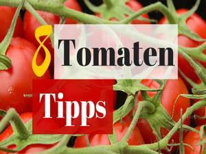 8 Tipps für gesunde Tomaten