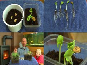 Kürbis selbst züchten