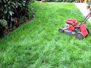 Rasen mulchen mit wenig Arbeit