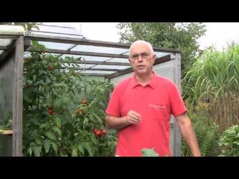 Tomaten düngen / Tipp 6