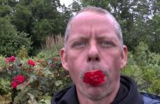 Rosen richtig vermehren