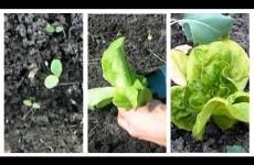 Salat im Februar aussäen