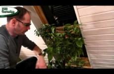 Schmierläuse an Pflanzen bekämpfen